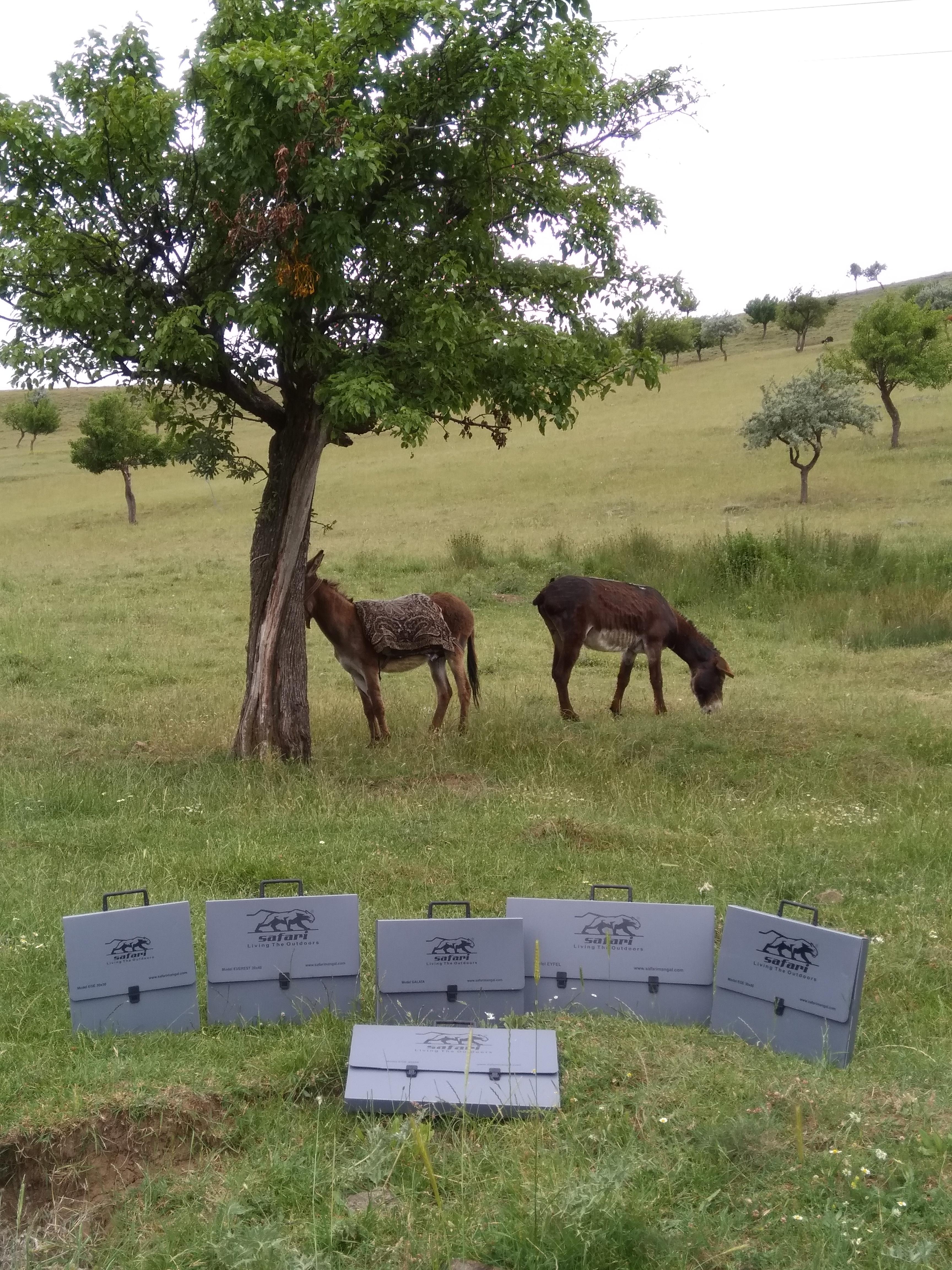 Safari Mangallar